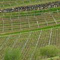 St. Emilion Bordeaux No 13 by Kevin Bain