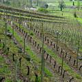 St. Emilion Bordeaux No. 8 by Kevin Bain