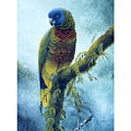St. Lucia Parrot - Majestic by Christopher Cox