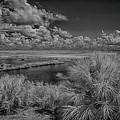 St Marks National Wildlife Refuge  by Jim Cook