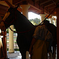 Stable Groom - 2 by Linda Shafer