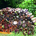 Stacked Firewood by Soni Macy