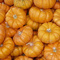 Stacked Mini Pumpkins by Carol Groenen