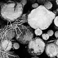 Stacked Wood Logs In Black And White by Iordanis Pallikaras