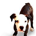Staffordshire Bull Terrier Puppy by Michael Tompsett