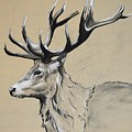 Stag  by GD Swenson