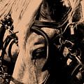 Stage Coach Horses by Wayne Potrafka