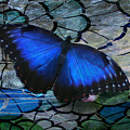 Landing On Stained Glass by Barbara S Nickerson