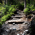 Stair Stone Walkway In The Forest by Jozef Jankola