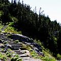 Stairs Along Skyline Trail by Edward Hawkins II