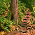 Stairway Forgotten by Robert Evans