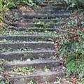 Stairway by Tim Allen