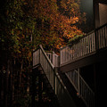 Stairway To Autumn Leaves by Aaron Shortt