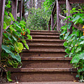 Stairway To Beauty by Kathy  Symonds