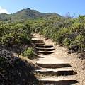 Stairway To Heaven On Mt Tamalpais by Ben Upham III
