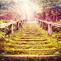 Stairway To The Garden by Debra and Dave Vanderlaan