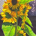 Stalk Of Sunflowers by Catherine G McElroy