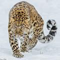 Stalker by Steven Szabo