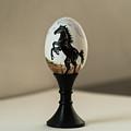 Stallion by Elizabeth Mundaden