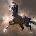 Stallion by Tom Schmidt