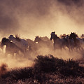 Stampede by Francine Gourguechon