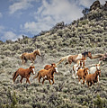 Stampede In The Sage by Wes and Dotty Weber