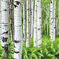 Stand Of Birch by Barry Levy