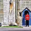 Standing Guard by Allen Beatty