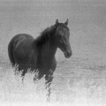 Standing Horse  by Lyle Crump