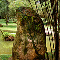 Standing Stone With Fern And Bamboo 19a by Gerry Gantt