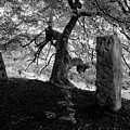 Standing Stones Near The Tree by Philip Openshaw