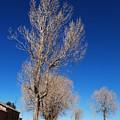 Standing Tree  Despite by Juan Gnecco