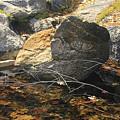 Stanislaus Rocks Spring by Larry Darnell