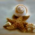 Star And Shells by Linda Sannuti