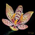 Star Burst by Tim Wemple