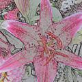 star Flower as Pencil Sketch by Joan Norris