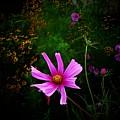 Star Flower by Joyce Kimble Smith