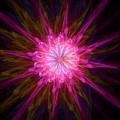 Star Flower by Raphael Terra