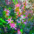 Star Flowers Shine by Philip Lodwick Wilkinson