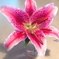 Star Gaze Lilly by Stephanie Irvin