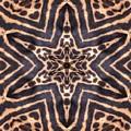 Star Of Cheetah by Maria Watt