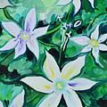 Star Of The Garden by Carlye Daugird