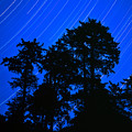 Star Trails Behind Ruby Beach Tree Group by Tim Rayburn