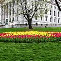 Star Tulips by Rockland Filmworks