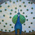 Starbucks Peacock  by Rick Cheadle