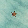Starfish Aquamarine by Fbmovercrafts