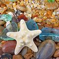 Starfish Art Prints Star Fish Seaglass Sea Glass by Baslee Troutman Art Prints