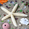 Starfish Beach Still Life by Garry Gay