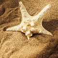 Starfish In Sand by Jorgo Photography - Wall Art Gallery