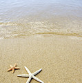 Starfish On Beach by Mary Van de Ven - Printscapes
